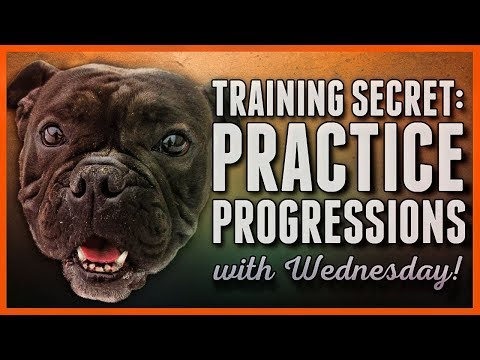 Dog Training Secret Progressions And Rehearsals Are The Key Manchester Dog Waste Removal Services